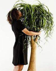 Osmosewasser - für ein gesundes Wachstum für Pflanzen