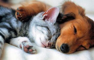 Osmosewasser für alle Haustiere